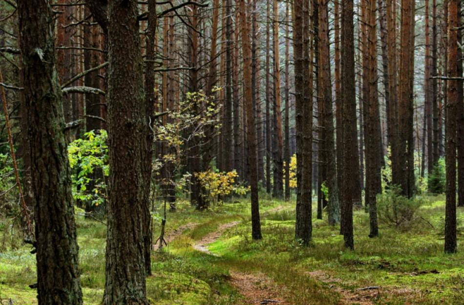 Užusalių seniūnijos miške mirė grybauti atvažiavusi moteris