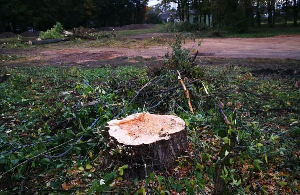 Kodėl Ramybės skvere staigiai pradėta šalinti medžius?