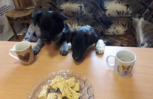 Šuns dienos proga pareigūnų dėmesys keturkojams augintiniams