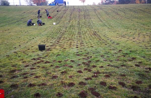 Dar nematytas 100 000 krokų svogūnėlių sodinimo būdas