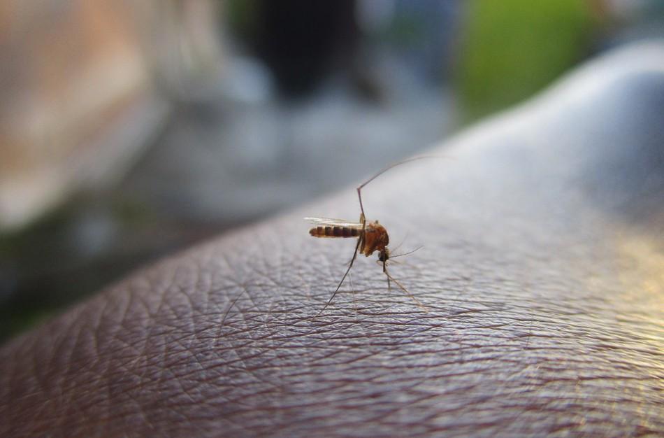 Naujos įvežtinės parazitinės ligos Lietuvoje