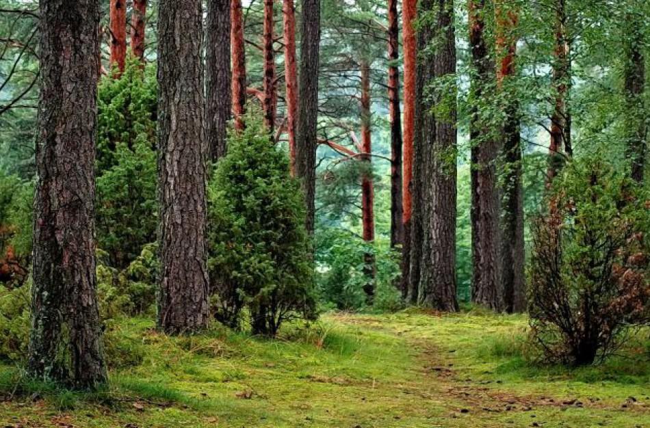 Svarbi informacija privačių miškų savininkams