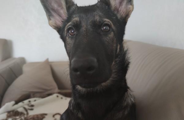VSAT Kinologijos instruktorius: Svarbiausia yra atrasti ryšį su šuniu