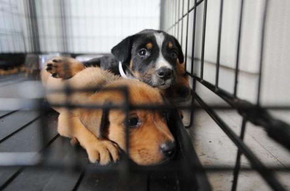 VMVT gavo per 250 pranešimų apie gyvūnų laikymo sąlygų pažeidimus, pradėta 12 tyrimų