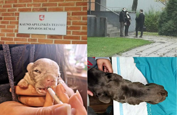 Kol teismas sprendžia dėl iš daugintojų perimtų šunų konfiskacijos - keturkojai priversti laukti sudėtingų veterinarinių paslaugų