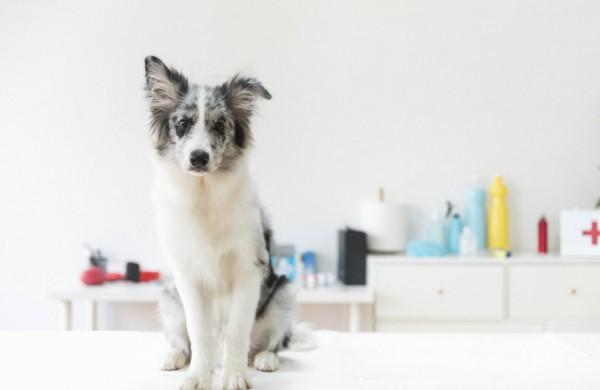 Konkurencijos taryba abejoja gyvūnų ženklinimo ir registravimo reikalavimų pagrįstumu