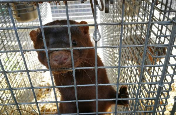 Seimo Kaimo reikalų komitete - rūpestis dėl audinių ir kitų gyvūnų gerovės, aptartos pasėlių deklaravimo aktualijos