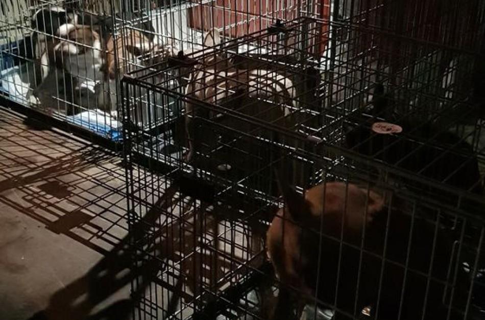 Jei teismas nenuspręs kitaip, 38 gyvūnų konfiskavimas biudžetui atsies 21 000 eurų