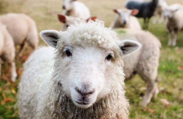 """""""Sodra"""": Paskutinės savaitės smulkiesiems ūkininkams kreiptis paramos"""