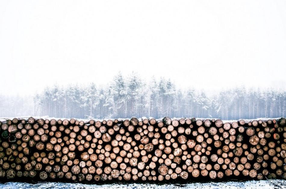 Būtina gauti leidimą medienos sandėliavimui ir krovimui šalia valstybinės reikšmės kelių
