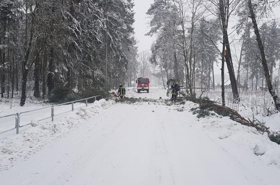 Sniego naštos neatlaikė medžiai – rajone juos šalino dešimtimis