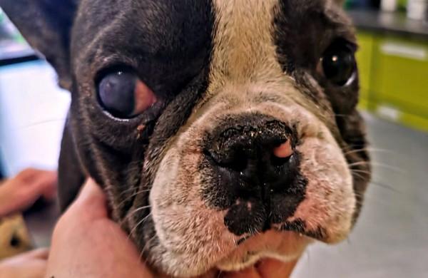 Teismo sprendimas pribloškė gyvūnų mylėtojus: nutarta skirti piniginę baudą, o šunis gražinti daugintojai