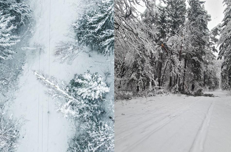 Valstybinės miškų tarnybos informacija dėl nuvirtusių medžių šalinimo