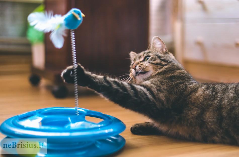 Žaislai katėms – ne tik pramoga, bet ir pagalba rūpinantis katės fizine bei emocine būkle
