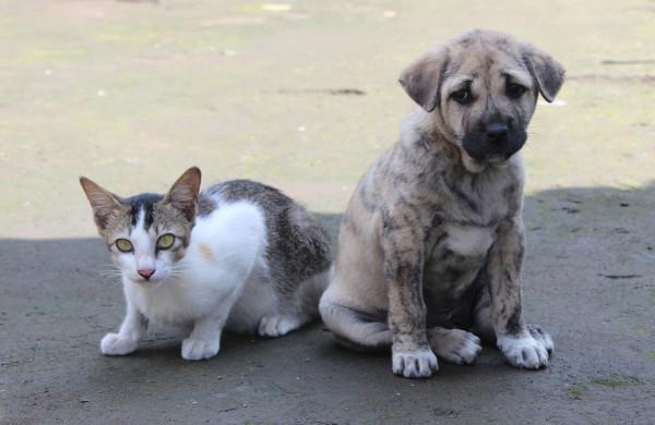 ULAC primena: pavasarį kyla pavojus plisti šunų ir kačių platinamoms ligoms
