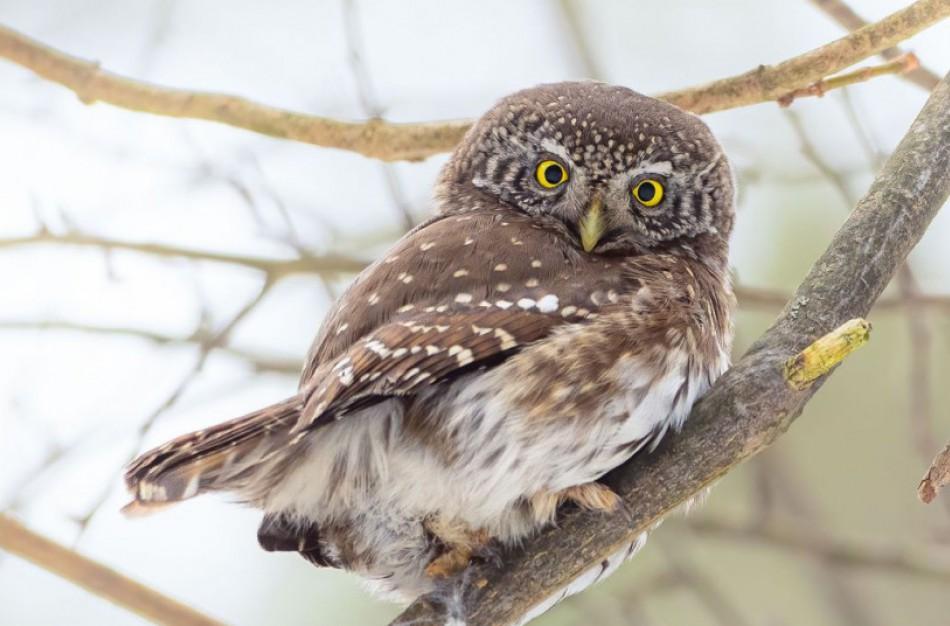 Saugant perinčius paukščius iki rugpjūčio nebegalima pjauti medžių
