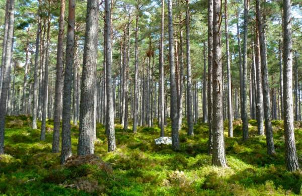 Gyventojų apklausa: didžiausią susirūpinimą kelia miškų tvarkymo būdas, ypač saugomose teritorijose