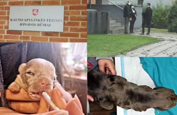 Taškas byloje dėl Jonavos rajono daugintojos šunų dar nepadėtas