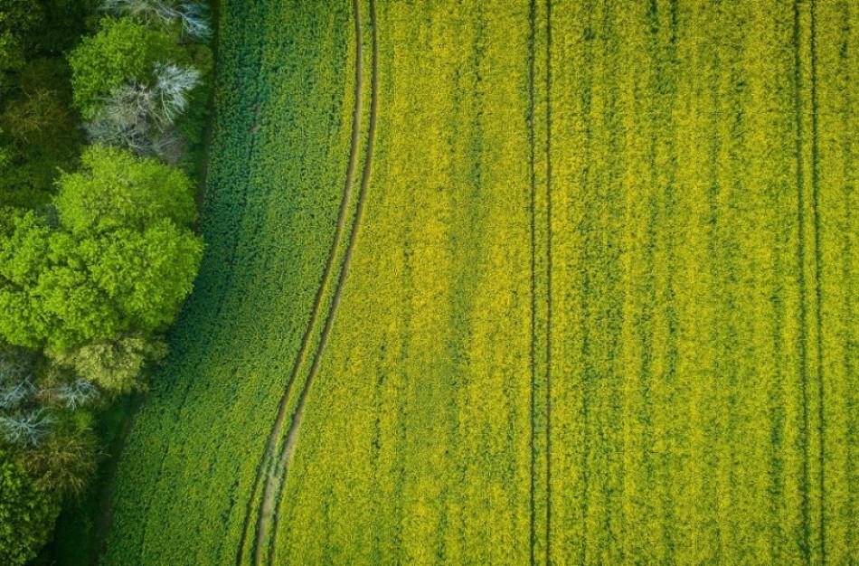 Daugiau galimybių išsinuomoti valstybinės žemės ūkio paskirties sklypus