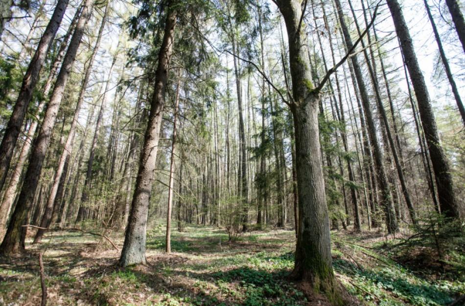 Miškus kontroliuos daugiau pareigūnų