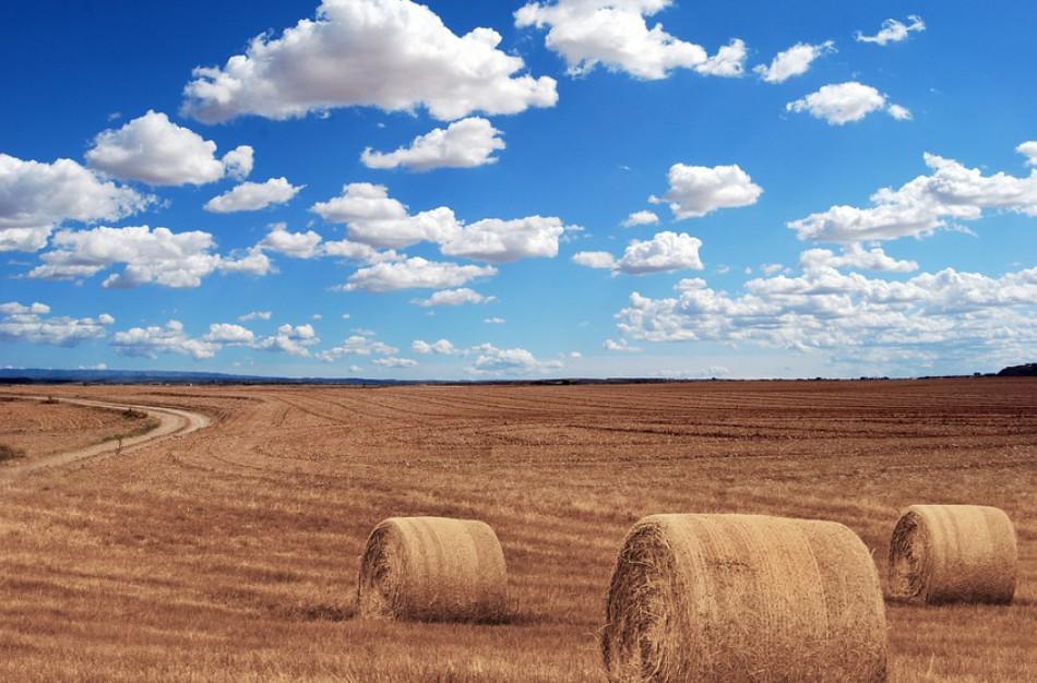 Užimtumo tarnyba: žemės ūkyje trūksta ir darbuotojų, ir darbo