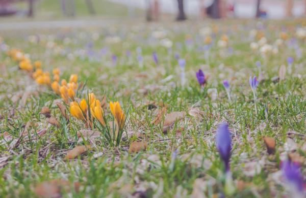 Užusalių bendruomenės iniciatyva viršijo lūkesčius: šiemet mūsų Šv. Velykos bus gražios ir spalvotos