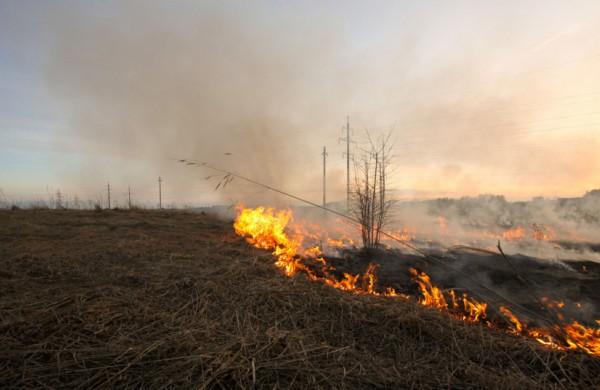 Nekontroliuojami pievų gaisrai labiausiai kenkia mikroorganizmų pasauliui