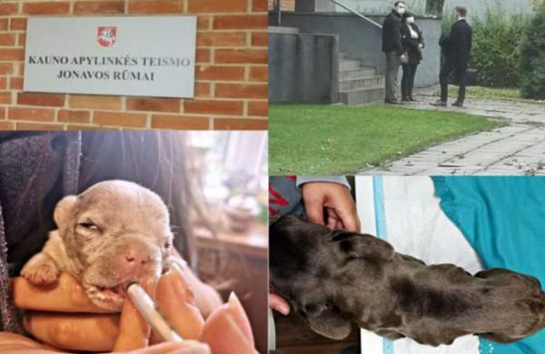 Teismas dar kartą svarstys daugintojos šunų likimą