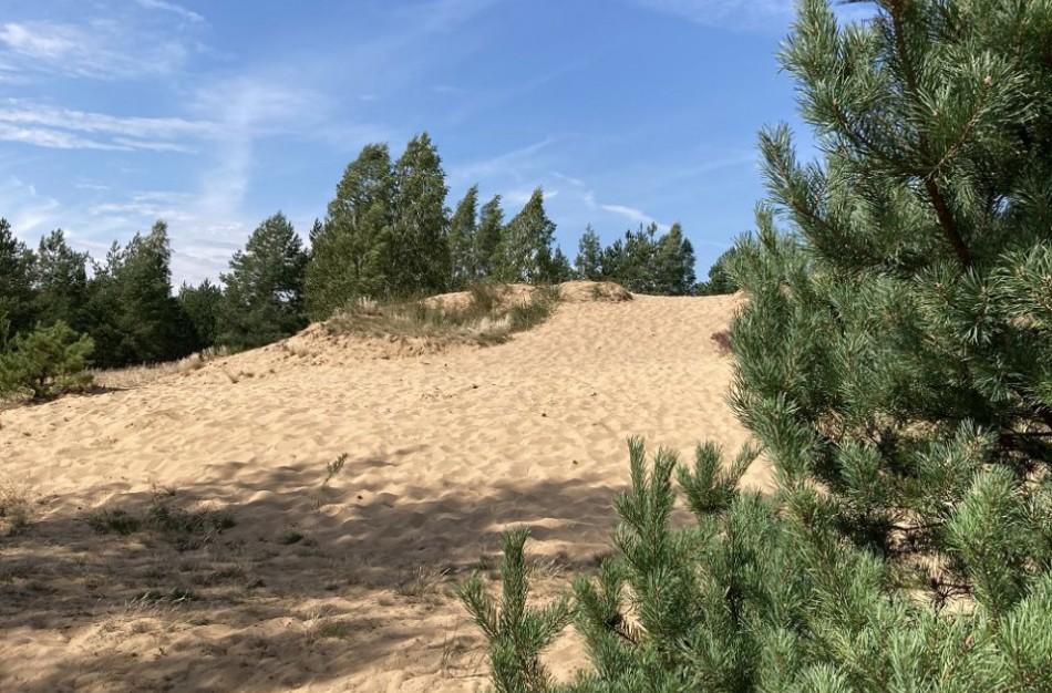 Vietinių gyventojų lankoma žemyninė kopa Dumsių miške bus atvira lankytojams