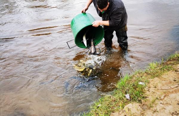 Šventosios upėje šiandien buvo išleista 200 vienetų aštriašnipių eršketų