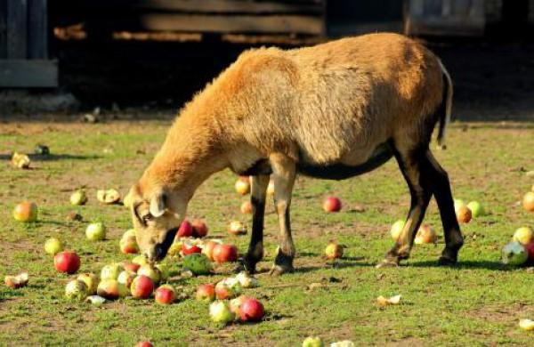 Ar susikaupęs maistas gali būti panaudojamas gyvūnams šerti?