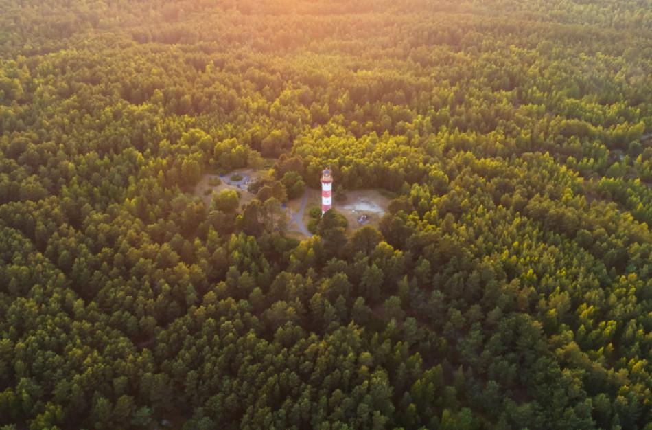 Nacionalinio miškų susitarimo startas: kaip ieškosime bendro sprendimo dėl miškų ateities
