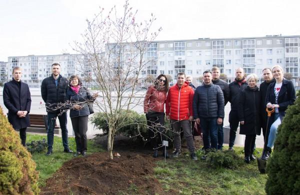 Verslo dovana miestui – įspūdinga magnolija