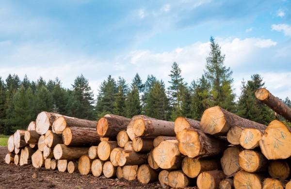 STT pateikė pastabas dėl Miškų įstatymo projekto