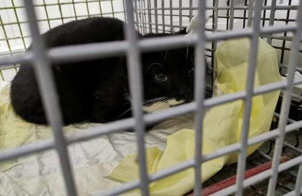 Žiaurumui ribų nėra: veterinarams teko padėti šaudmenimis suvarpytoms katėms