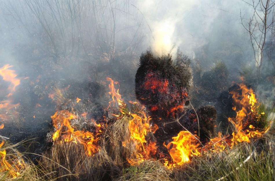 Miškininkai įspėja: šalyje įsivyravo IV klasės gaisringumas – Jonines švęskime atsargiai