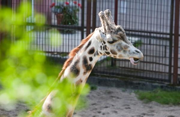 Zoologijos sodo gimtadienis: nuo įsikūrimo gyvūnų padaugėjo nuo 40 iki 2 tūkst.