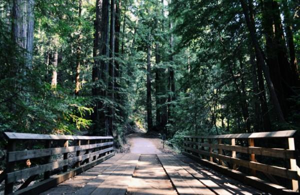 Laisvalaikis miške: ką reikia žinoti, kad poilsiautume atsakingai