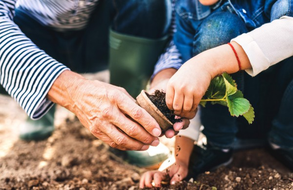 Priemonė iš namų vaistinėlės nuo ligų apsaugo augalus ir padidina sodo derlių!