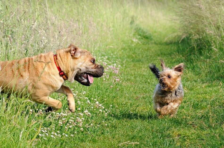 Mažiau nei metai lieka suženklinti gyvūnus (šunis, kates bei šeškus)