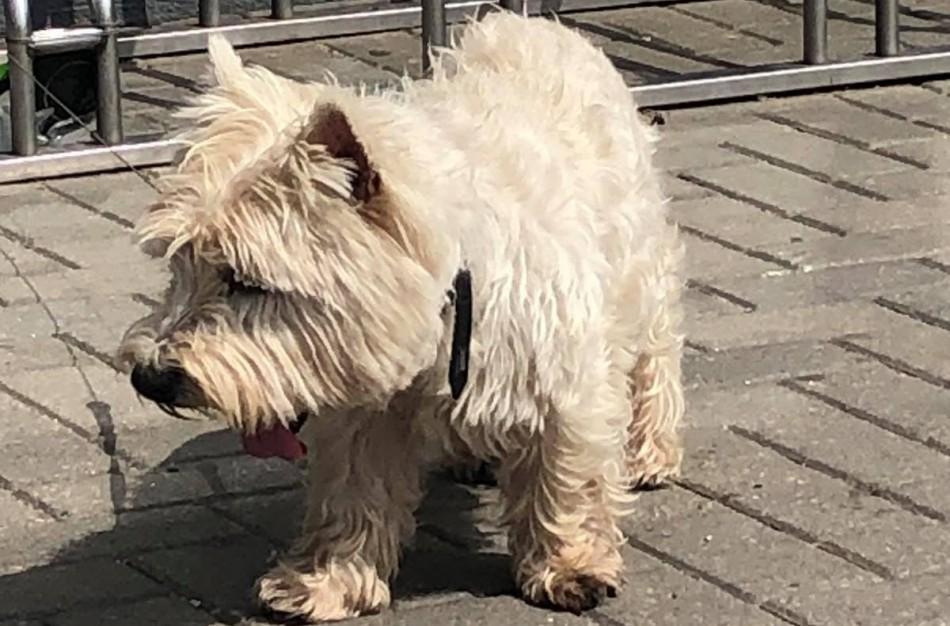 Prie parduotuvės paliktas šuo sulaukė tarnybų dėmesio