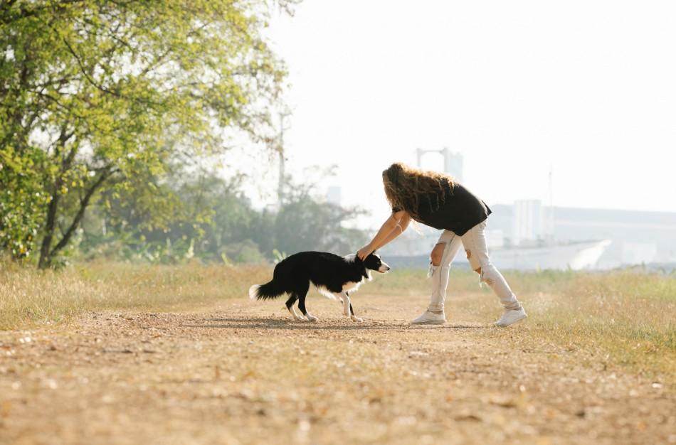 Ar galima glostyti svetimus gyvūnus ir kaip tai daryti saugiai
