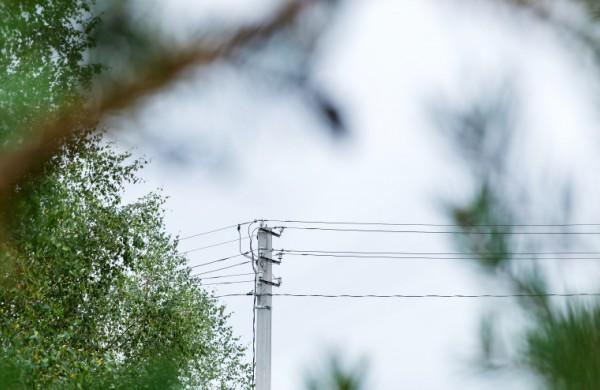 Tvarkant pavojingus medžius bus užtikrintas patikimesnis elektros energijos persiuntimas šalies gyventojams
