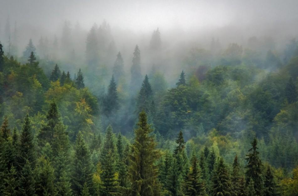 """Aplinkosaugininkai rugpjūtį pradeda su nauja akcija """"Medienos kenkėjas"""""""