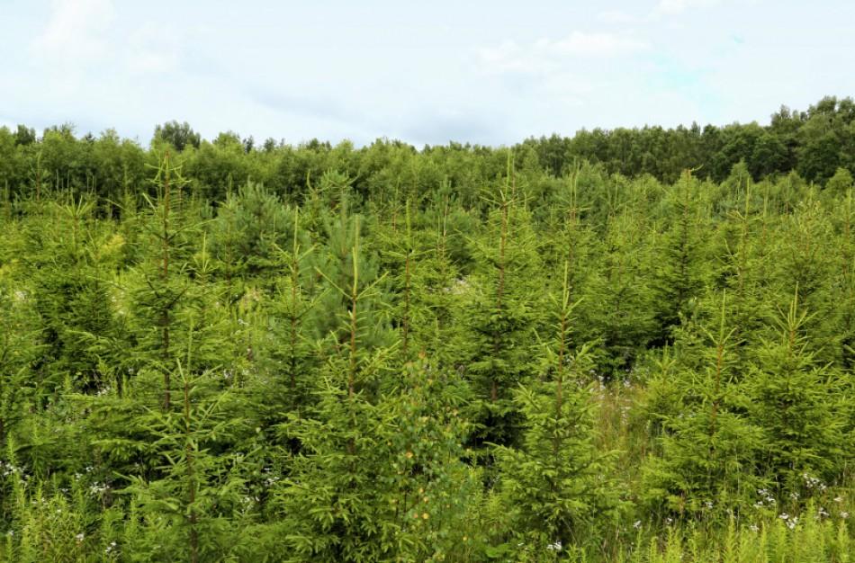 Jaunuolynai ugdomi, kad miškai būtų sveiki ir biologiškai įvairūs