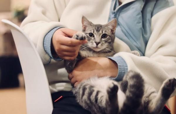 Gyvūnų ženklinimas ir registravimas: ką turi žinoti savininkai