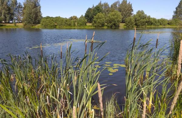 Žeimių ežero vanduo neatitinka higienos normos reikalavimų