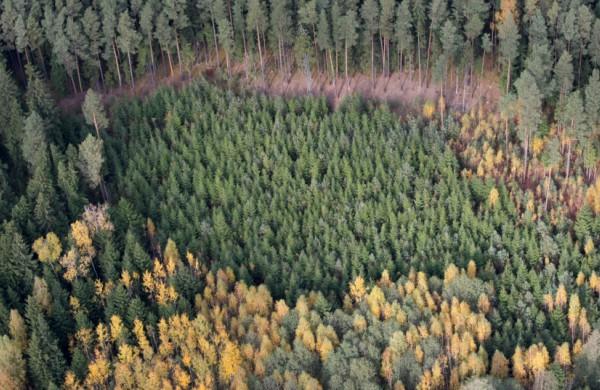Minint Miškininko dieną, rugsėjį laukia beveik 30 pramogų miške