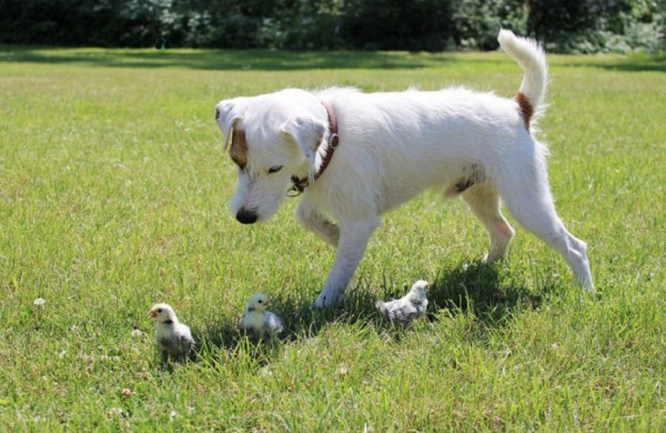 Gyvūnų gerovės klausimai perduodami Aplinkos ministerijai