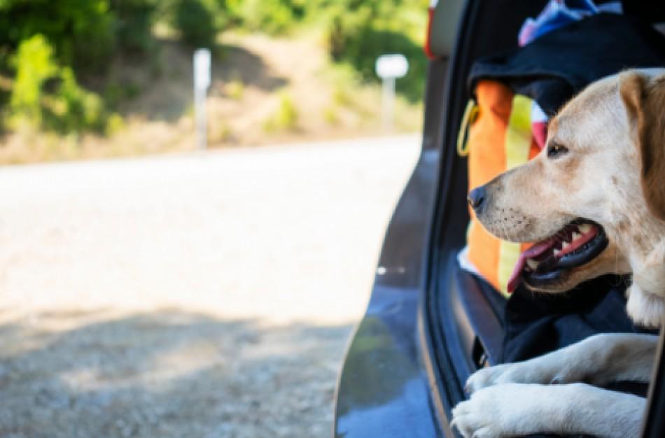 Kuo skiriasi augintinio (šuns, katės, šeško) nekomercinė kelionė nuo jo kelionės į užsienį pas naująjį savininką?